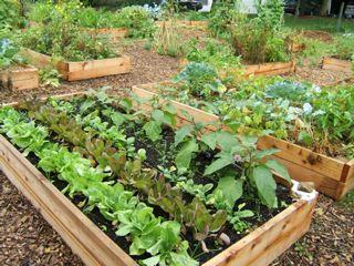 community_garden1